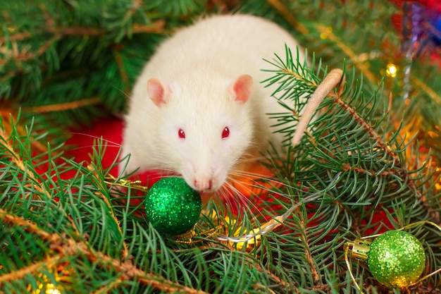 Ratto bianco e albero di natale bianchi