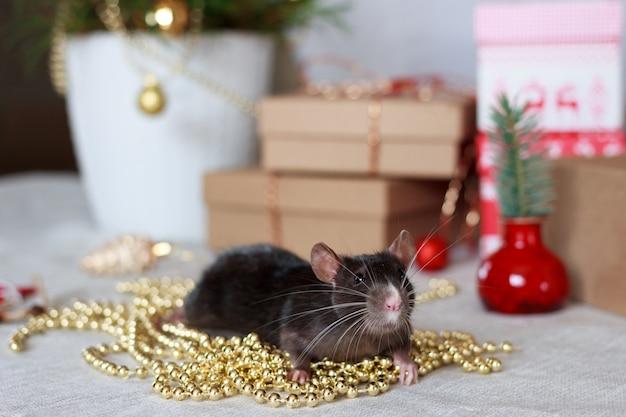 Ratto cinese di nuovo anno con decorazioni festive