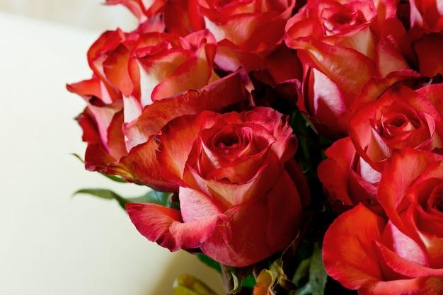 Rbelle rose rosse