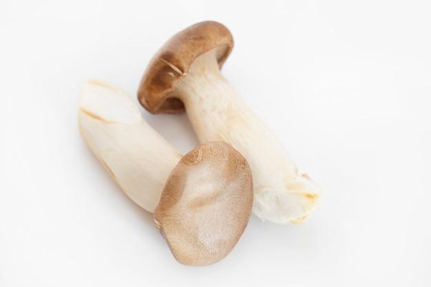 Re oyster mushroom su priorità bassa bianca.