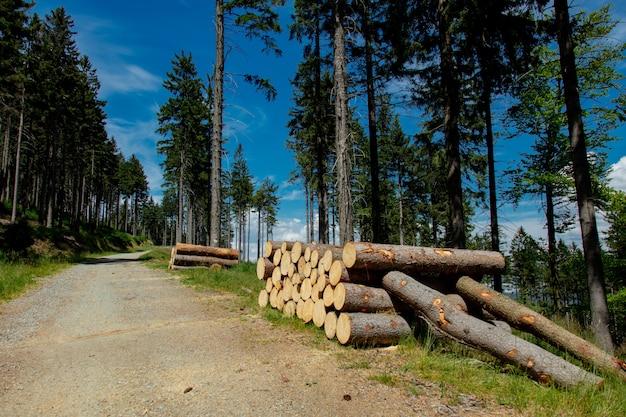 Registri vicino alla strada nella foresta della montagna, polonia