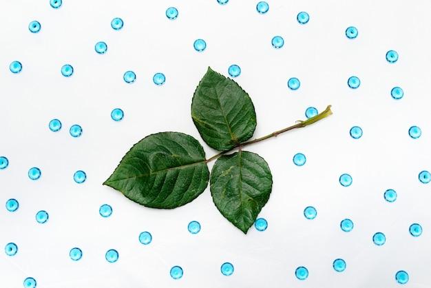 Regolazione della stazione termale con la crema cosmetica, il gel, il sale da bagno e le foglie della felce sul fondo di legno bianco della tavola