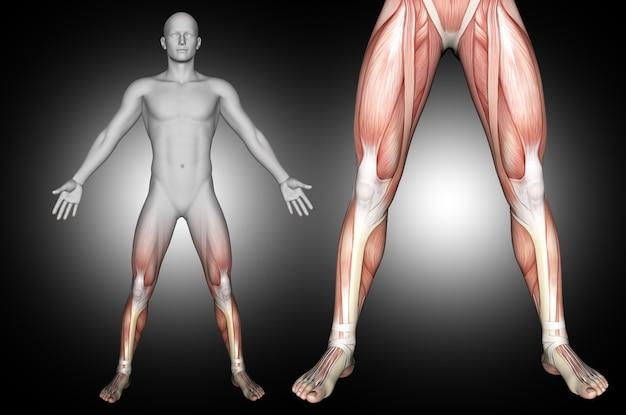 Rendering 3d di una figura medica maschile con i muscoli della parte inferiore della gamba evidenziati