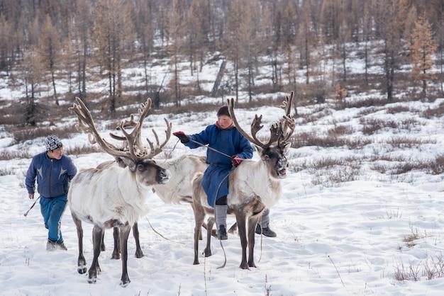Renna mongola nella famiglia tradizionalmente tsaatan sulle loro renne a taiga, mongolia
