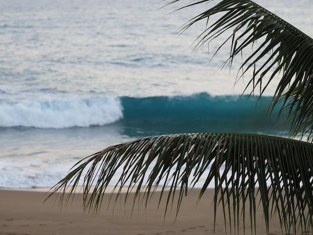 Repubblica dominicana, spiaggia al crepuscolo, onde e rami di palma. tramonto. messa a fuoco selettiva. focalizzazione morbida.
