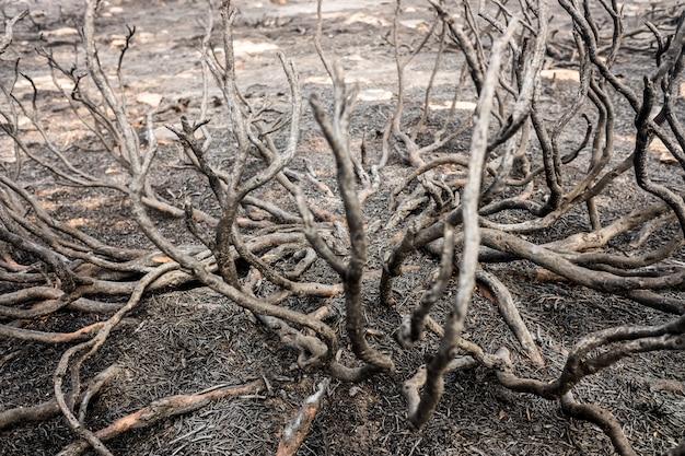 Resti di un incendio boschivo con macchia bruciata.