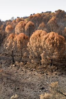 Resti di un incendio boschivo