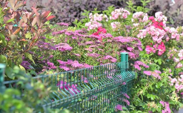 Rete metallica in una bella e variegata siepe che sboccia e chiude un giardino