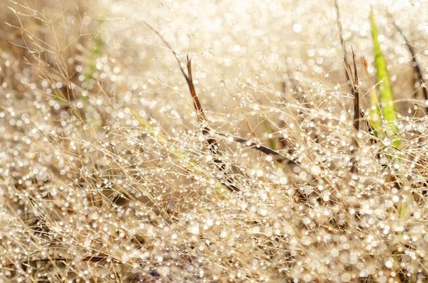 Reticolo del bokeh e gocce d'acqua sull'erba sfocata