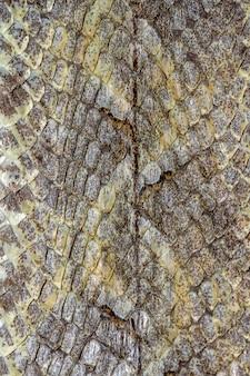 Rettile pelle di serpente