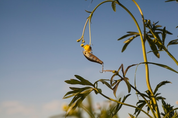 Richiamo di pesca che appende sulla pianta del fiore giallo contro il cielo
