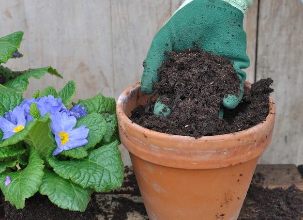 Riempi un vaso di fiori di terra