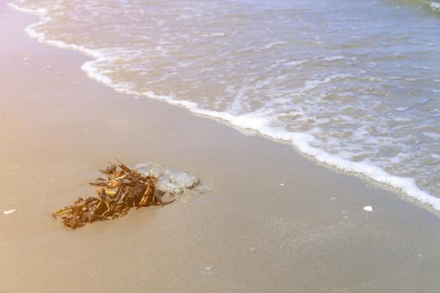 Rifiuti sulla spiaggia di sabbia che mostra il problema di inquinamento ambientale