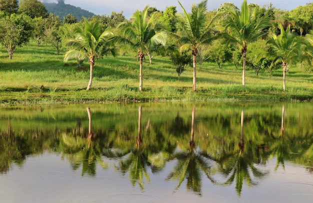 Riflessione degli alberi di cocco sullo stagno con cielo blu