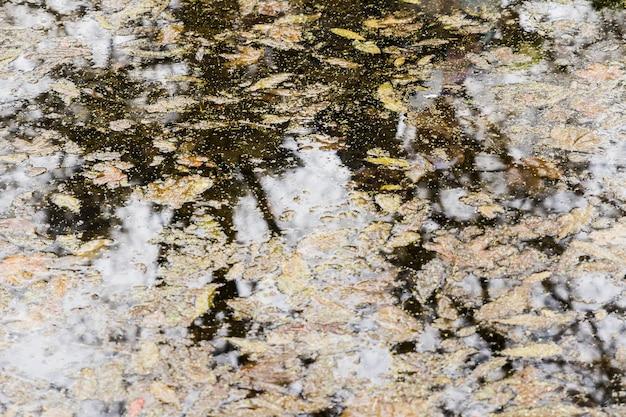 Riflessione dell'albero su acqua con foglie d'autunno