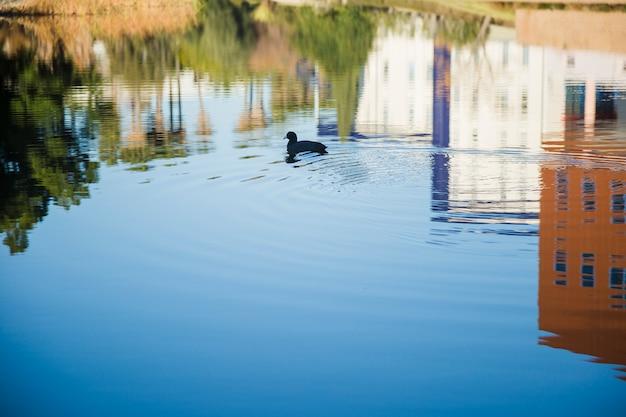 Riflessione di case sull'acqua con anatra