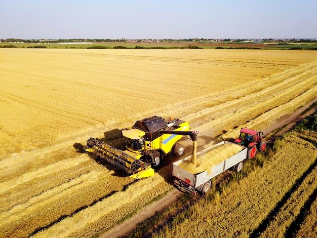 Rimorchio di caricamento della mietitrice con grano. ripresa aerea di agricoltori che lavorano sul campo di grano con macchinari.