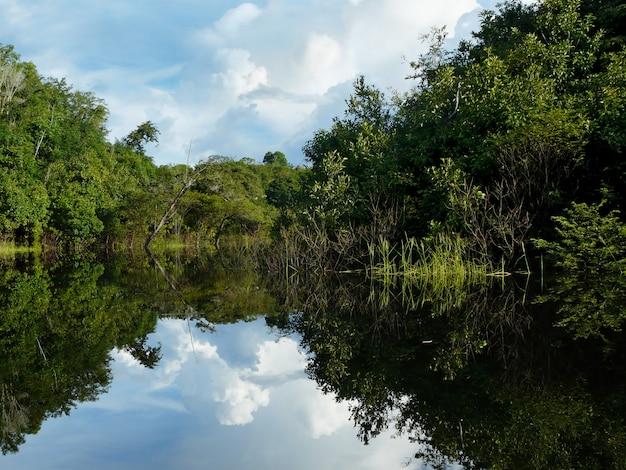 Rio delle amazzoni nella foresta pluviale