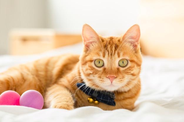 Riposo simpatico gatto