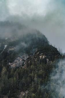 Ripresa aerea della bellissima foresta nebbiosa scura