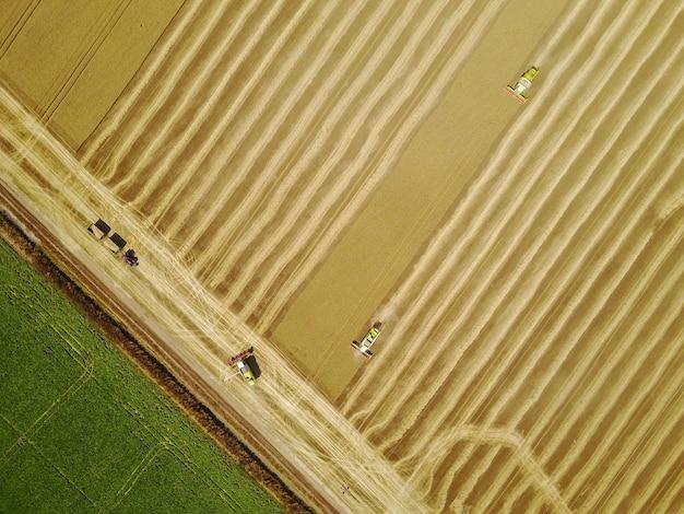 Ripresa aerea della mietitrice gialla che lavora al campo di frumento.