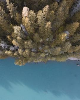 Ripresa aerea di bellissimi alberi ad alto fusto in una foresta