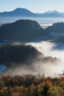 Ripresa aerea di una bellissima foresta di alberi coperti di nebbia in bled, slovenia