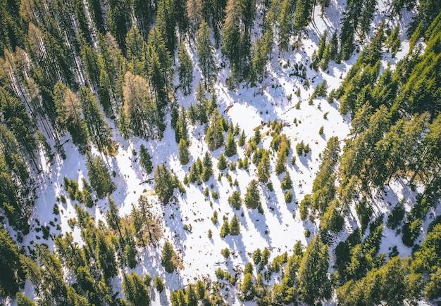 Ripresa aerea di una bellissima foresta innevata con alberi ad alto fusto verde in inverno
