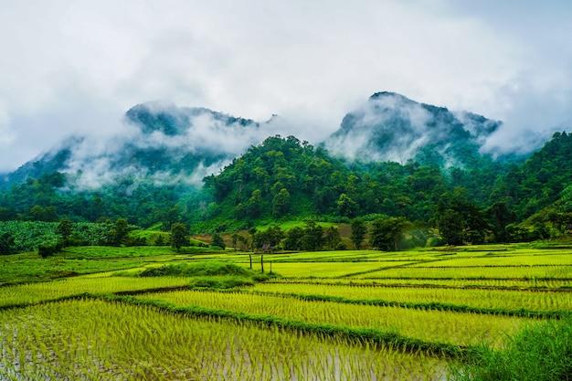 Risaie accanto alle alte montagne nel giorno di pioggia