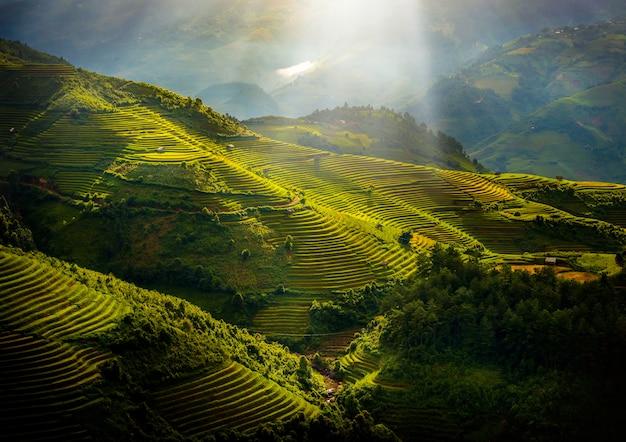 Risaie su a terrazze con il padiglione di legno ad alba in mu cang chai, yenbai, vietnam.