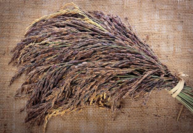 Riso thai red jasmine (bacca di riso)