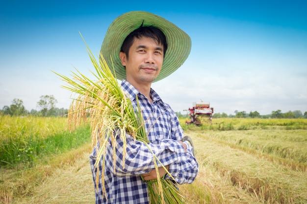 Risone felice del raccolto del giovane agricoltore asiatico in un giacimento verde del riso