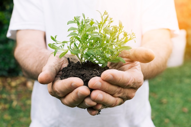 Ritaglia il giardiniere con una piantina fresca nelle mani