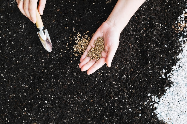 Ritaglia le mani piantando semi
