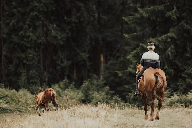 Ritratto da dietro del cavallo da equitazione da cowboy nella foresta