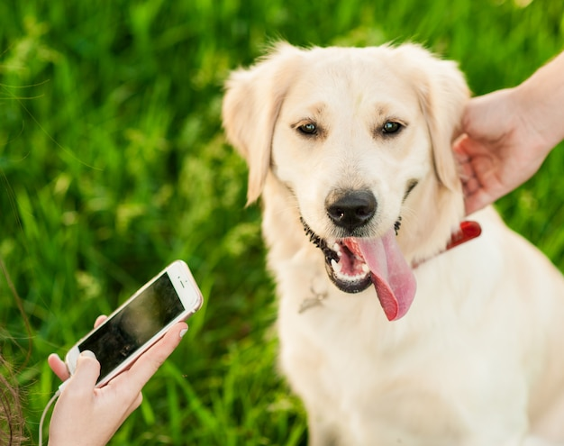 Ritratto del cane felice bianco di golden retriever nel fondo di estate