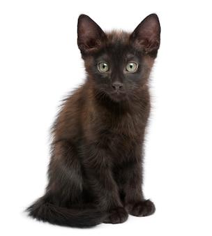 Ritratto del gattino nero davanti a fondo bianco