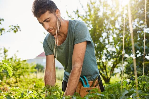 Ritratto del giardiniere maschio giovane caucasico attraente serio in camicia blu che lavora nel giardino, tagliando le foglie morte con l'espressione concentrata del fronte.