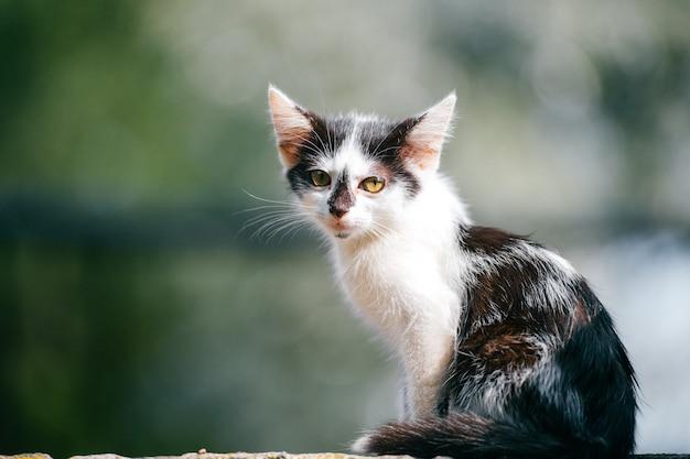 Ritratto del primo piano di bello piccolo gattino urbano senza tetto neonato innocente che si siede sul bordo della strada nel giorno soleggiato di estate. animale domestico all'aperto in natura. faccia da compagnia. gatto peloso
