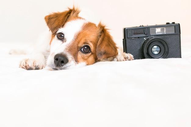 Ritratto del primo piano di un piccolo cane sveglio che si siede sul letto con una macchina fotografica d'annata nera. animali domestici al chiuso