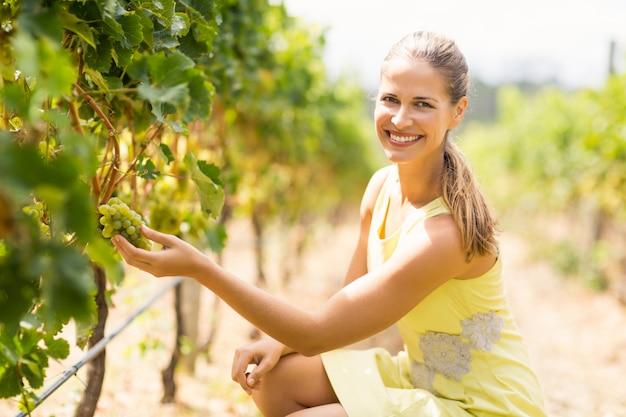 Ritratto del vignaiolo femminile sorridente che ispeziona l'uva