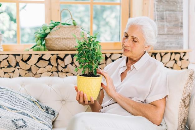 Ritratto della donna senior che si siede sul sofà che esamina la pianta da vaso