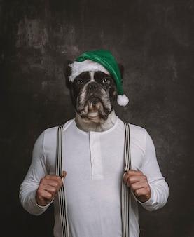 Ritratto della testa del bulldog francese con il cappello verde di natale sul corpo di un uomo con le parentesi graffe