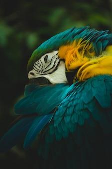 Ritratto di ara blu e gialla (ara ararauna)