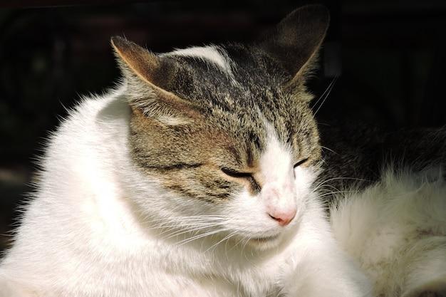 Ritratto di gatto di strada