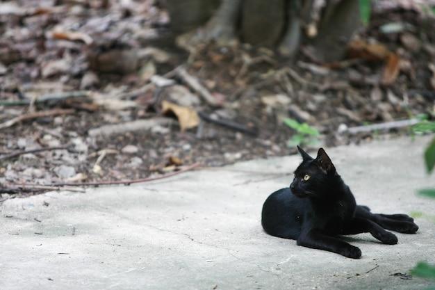Ritratto di gatto nero sulla strada