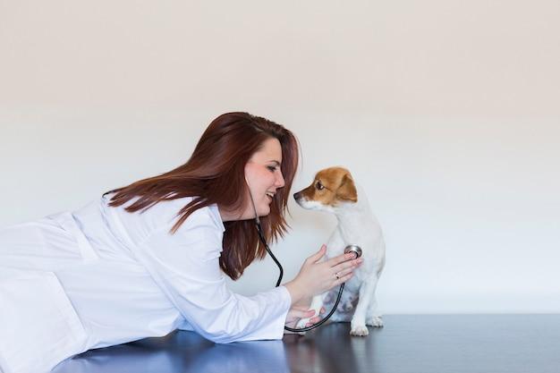 Ritratto di giovane donna veterinaria che esamina un piccolo cane sveglio usando lo stetoscopio, isolato su fondo bianco. in casa