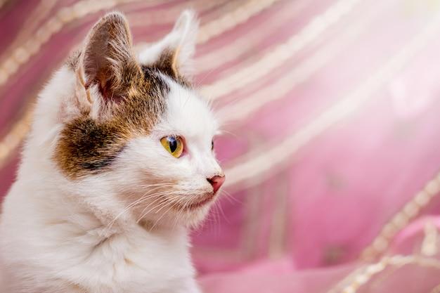 Ritratto di giovane gatto bianco con macchie in primo piano profilo