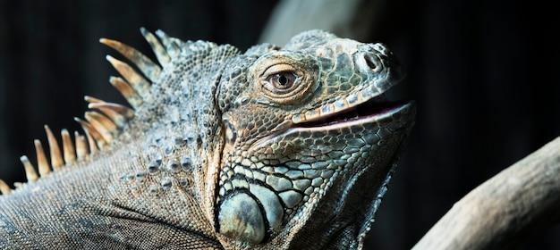 Ritratto di iguana su un albero