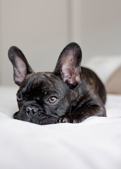 Ritratto di piccolo cucciolo carino a riposo